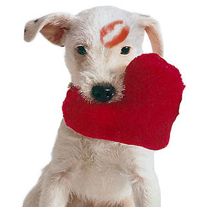 Valentines-Day Pup