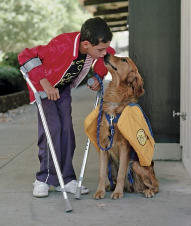 Essay on service dogs