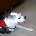 Sasha Goes to NC State Veterinary School
