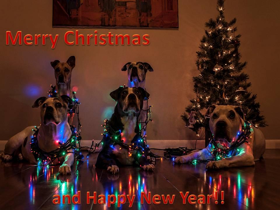 Holiday pups