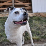 New Treatments for Sasha - Good Results