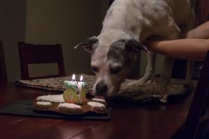 Sasha-13-Licks-cake