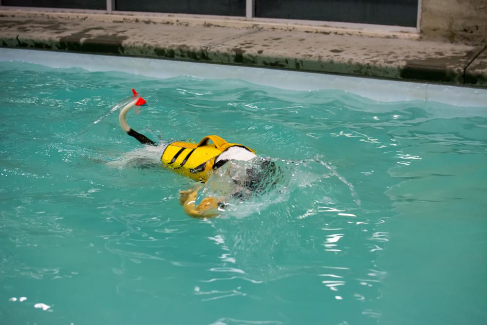 Sasha-13-Pool-2