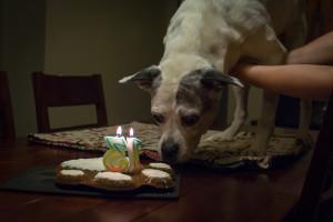 Sasha-13-meets-cake