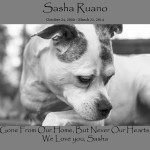 Sasha In Our Hearts